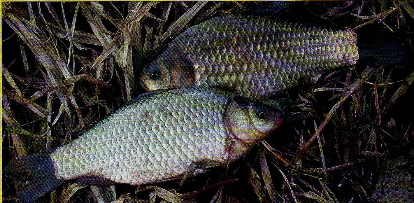 перловка с ревитом рыбалка